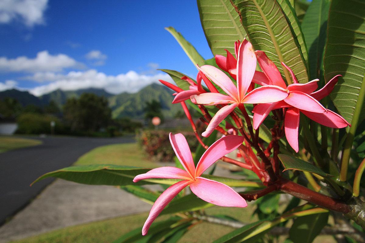 тропический цветы картинки с названиями отметив