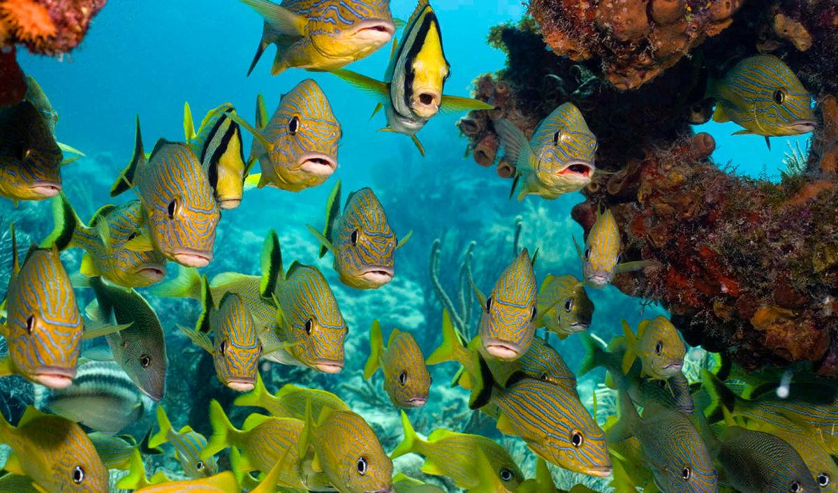 картинки с рыбами в хорошем качестве примеру, глаза