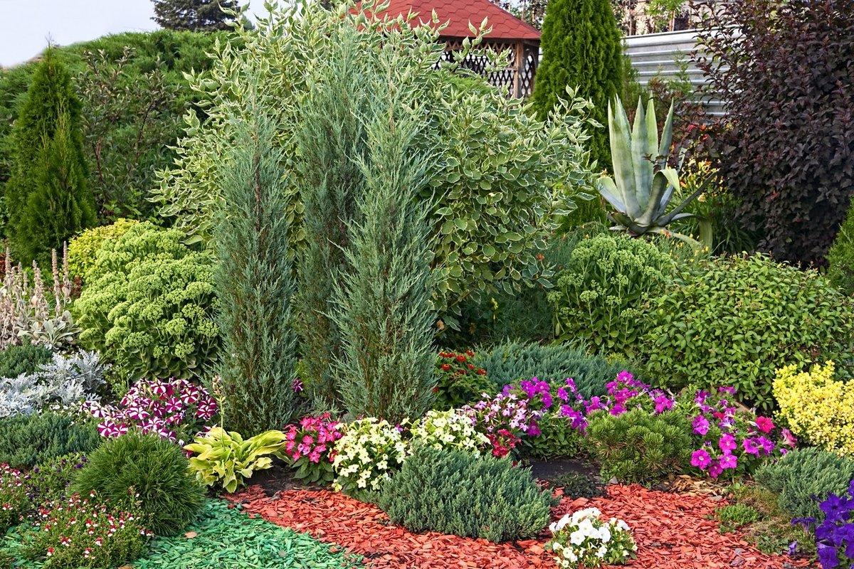 Для, купить растения для сада олх
