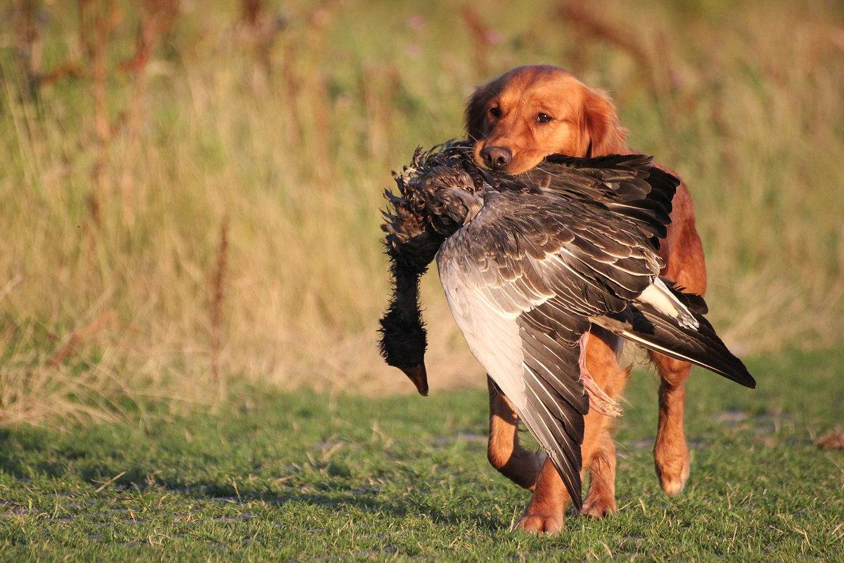 картинки охотники на птиц заявление