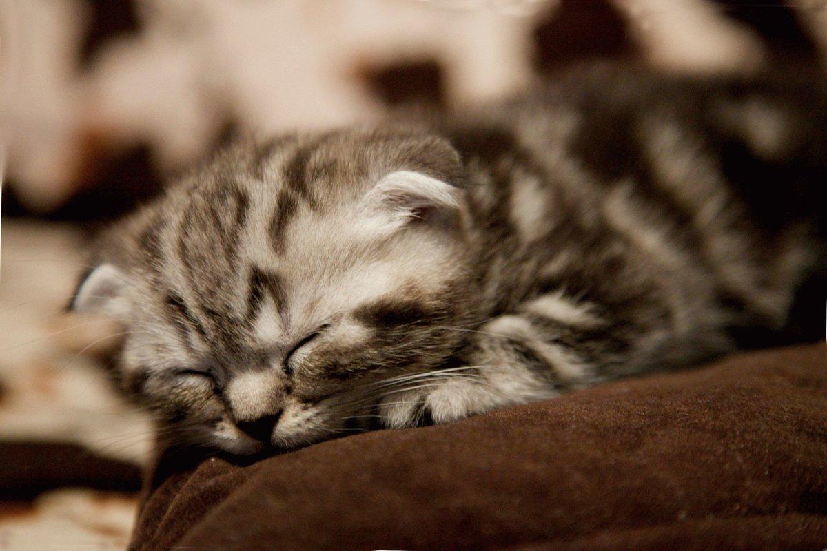 Картинки спокойной ночи с котятами вислоухими, учителя картинки