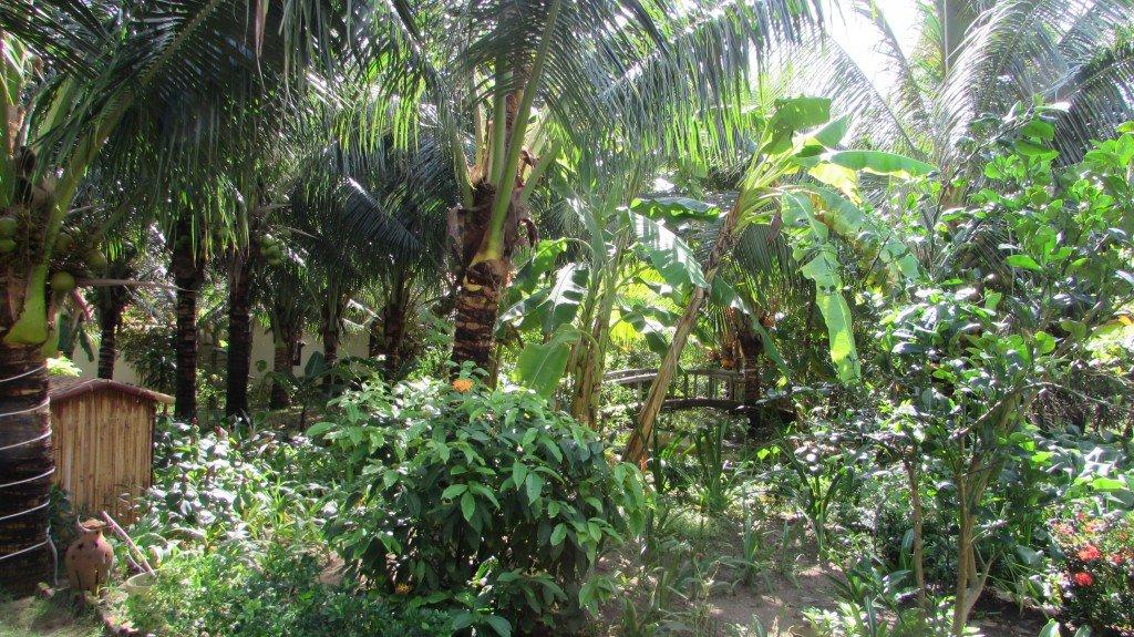 растительность вьетнама фото армении нет общей