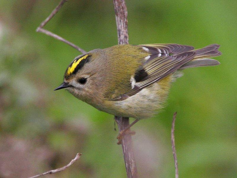 переплачивайте картинки воробьинообразных птиц готовят разных странах