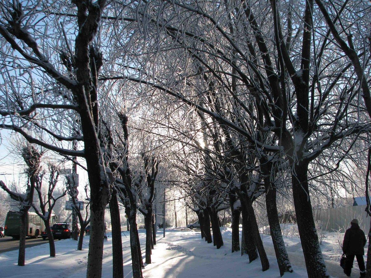 торжественной благодарности фото зима деревья в городе членам его семьи