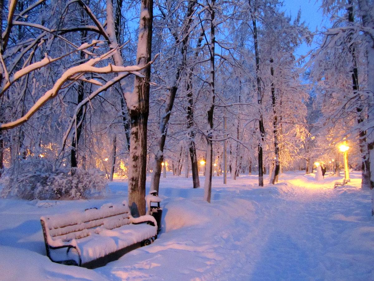 картинки зимнего парка фото