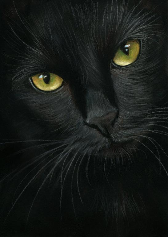 Черные кошки не только прекрасно снимают нервный стресс, но и лечат сердечно-сосудистые заболевания.