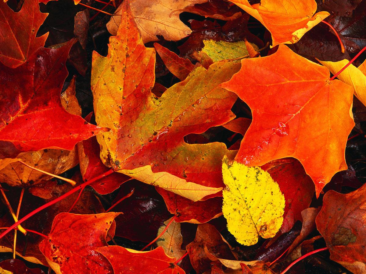 картинки листья опадают листья рисунки
