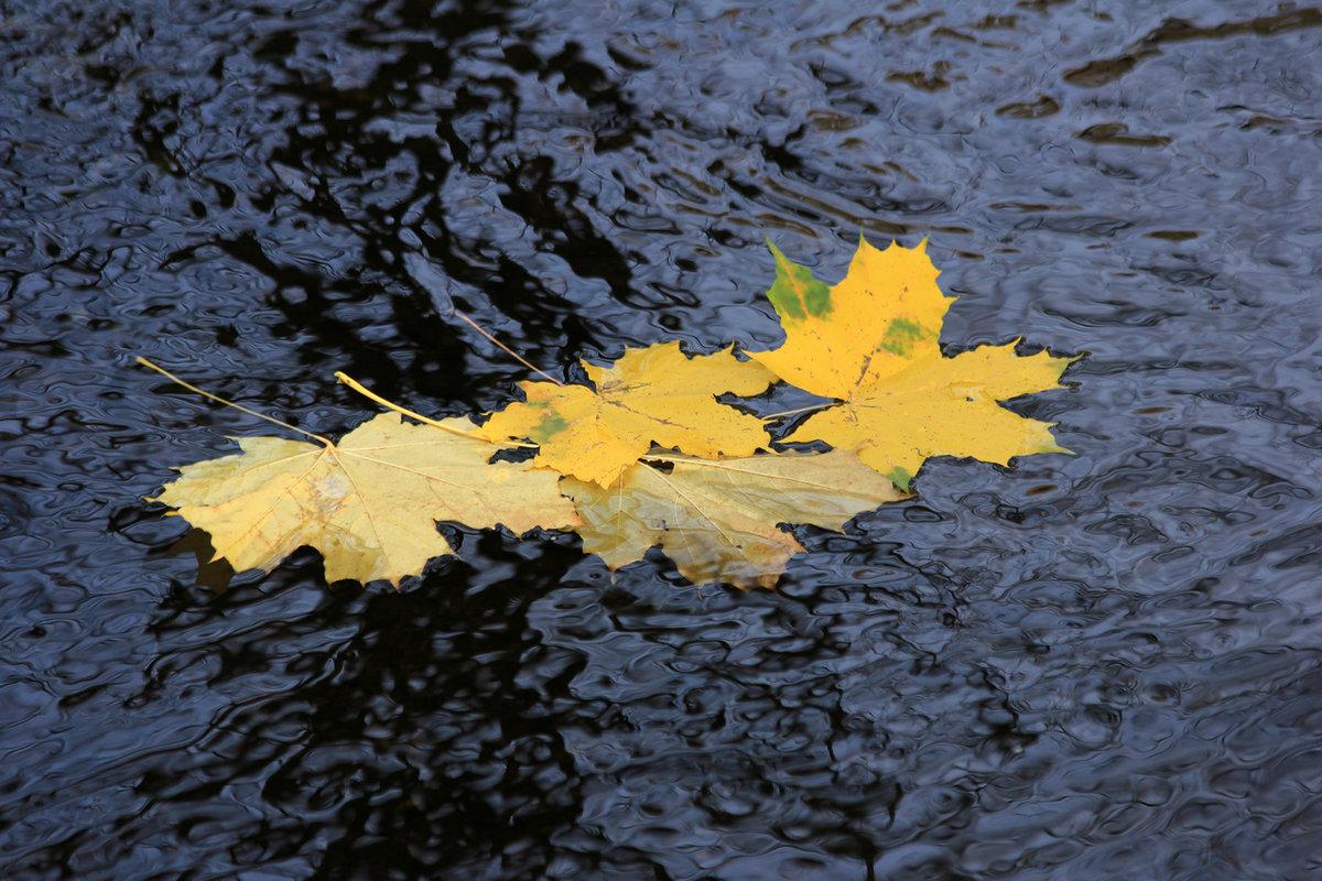 Картинки листопада на воде