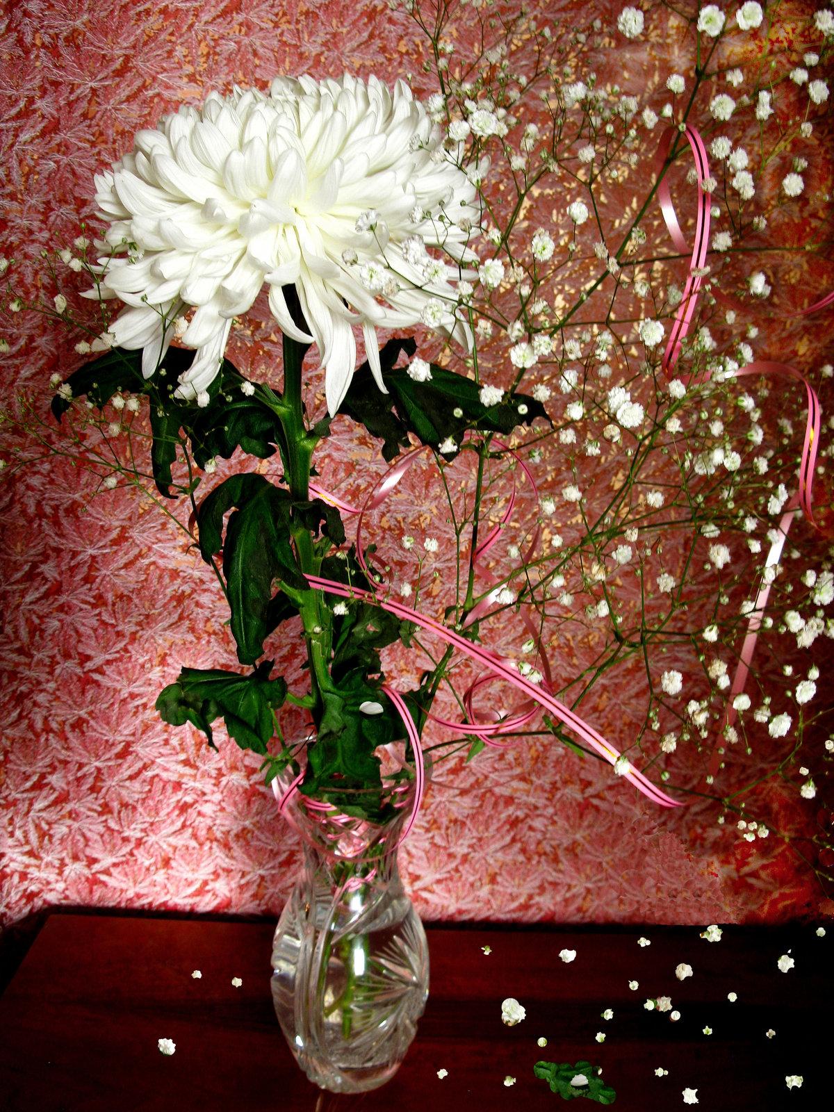 фотографии хризантем в вазе на окне потому, что