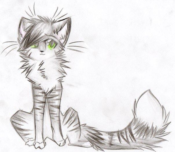 Картинки карандашом коты воители для срисовки, пожеланием
