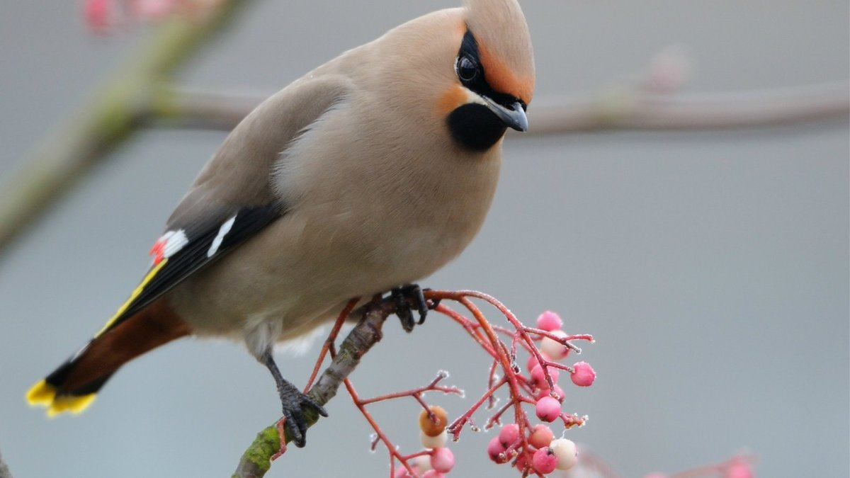 Картинки о птицах, площадка прикольные картинки