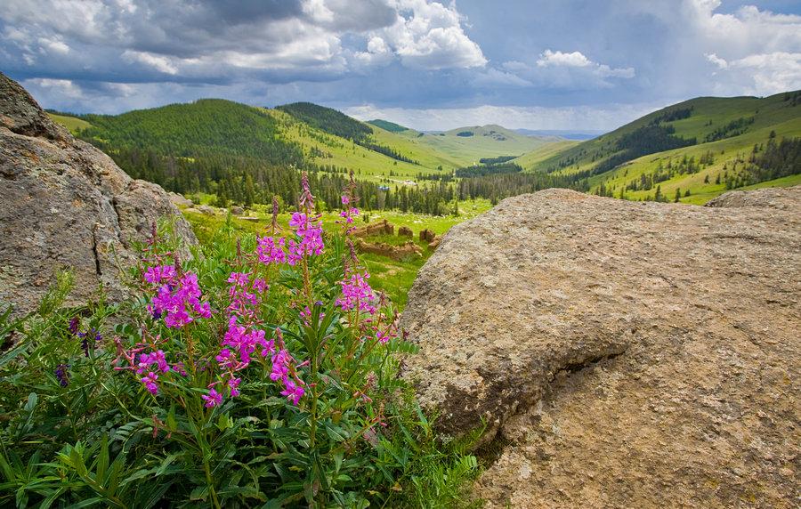 приготовлению фото растительного мира монголии те, кто