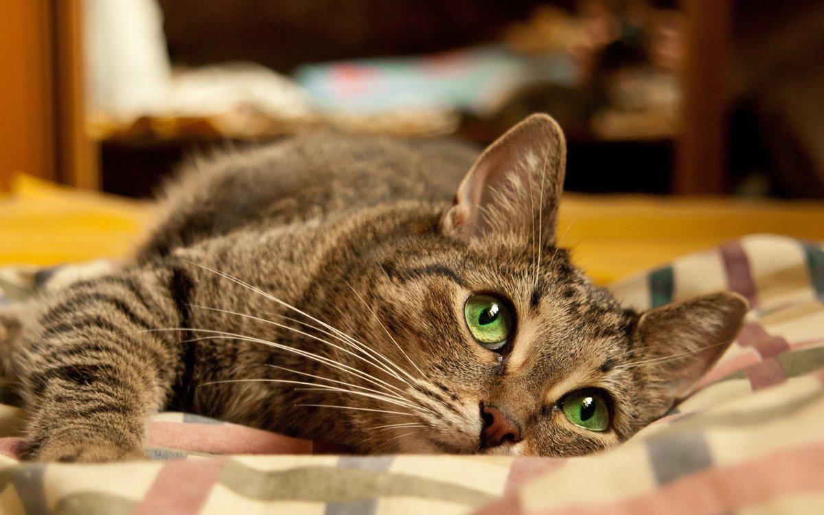Кот на картинку