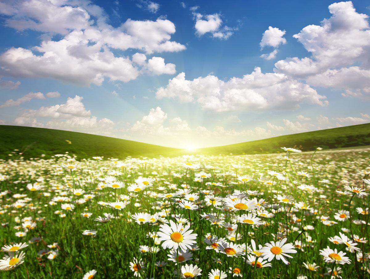 Украшенная шариками, картинки с небом и солнцем