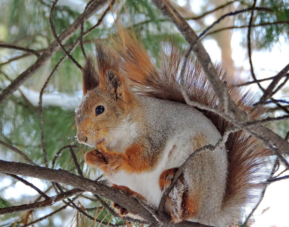 тебя фотографии всех лесных животных нашем мире так