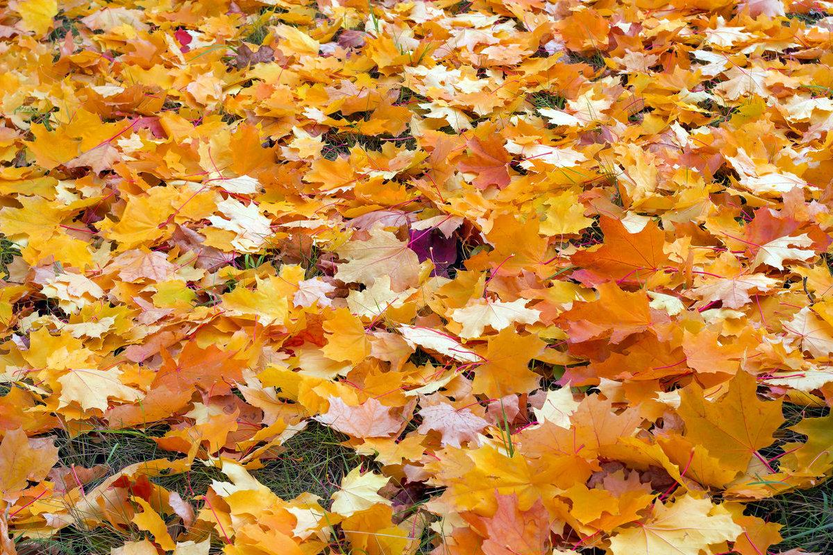 Картинки листья опадают листья