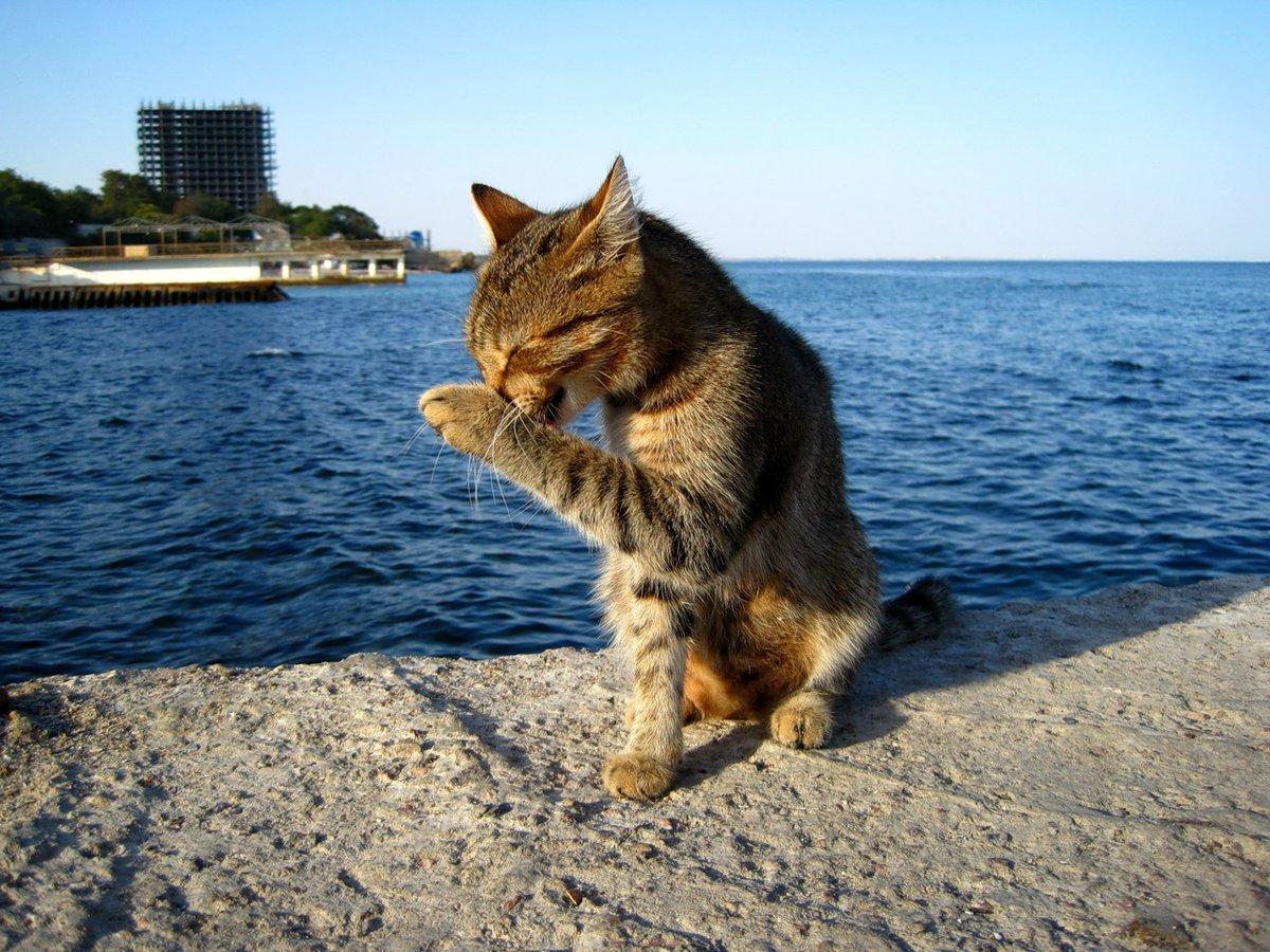 восемь картинки котята в море месте подберет стиль