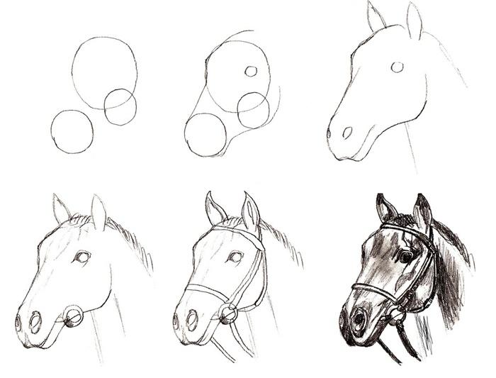 лошадь фото как нарисовать