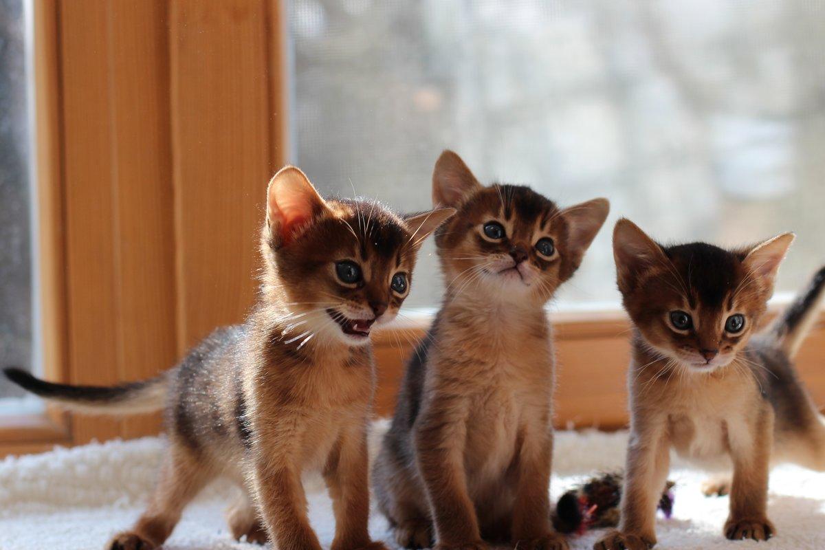 Кошек разных пород картинки