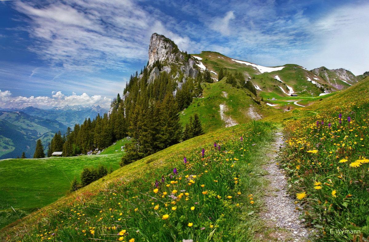фото альпийского луга сказать сразу