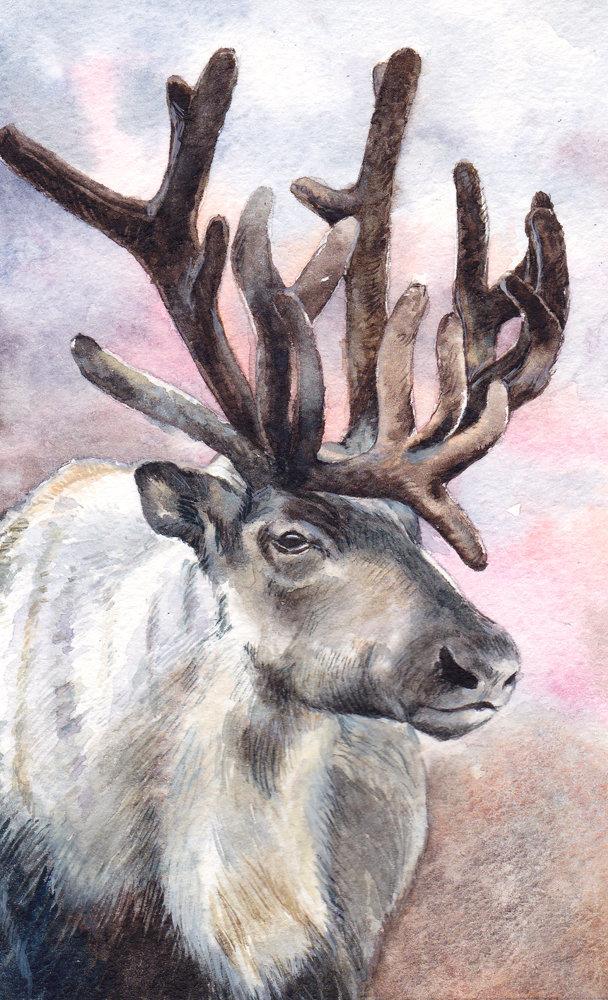центре картинки северных оленях рисовать стоит