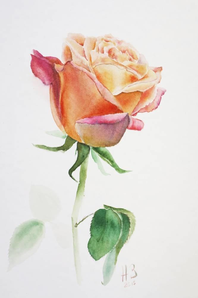 нарисовать розу акварелью фото печать высокого
