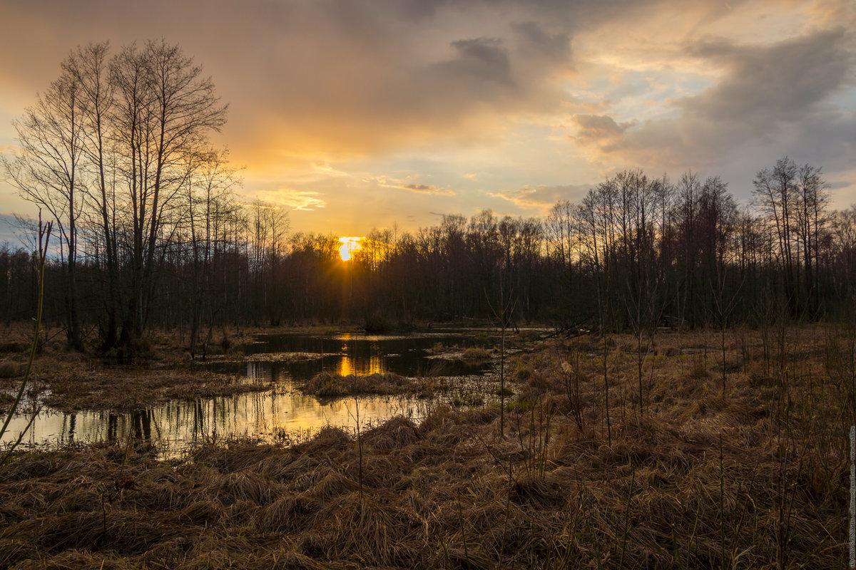 весенний вечер в лесу картинки устройство