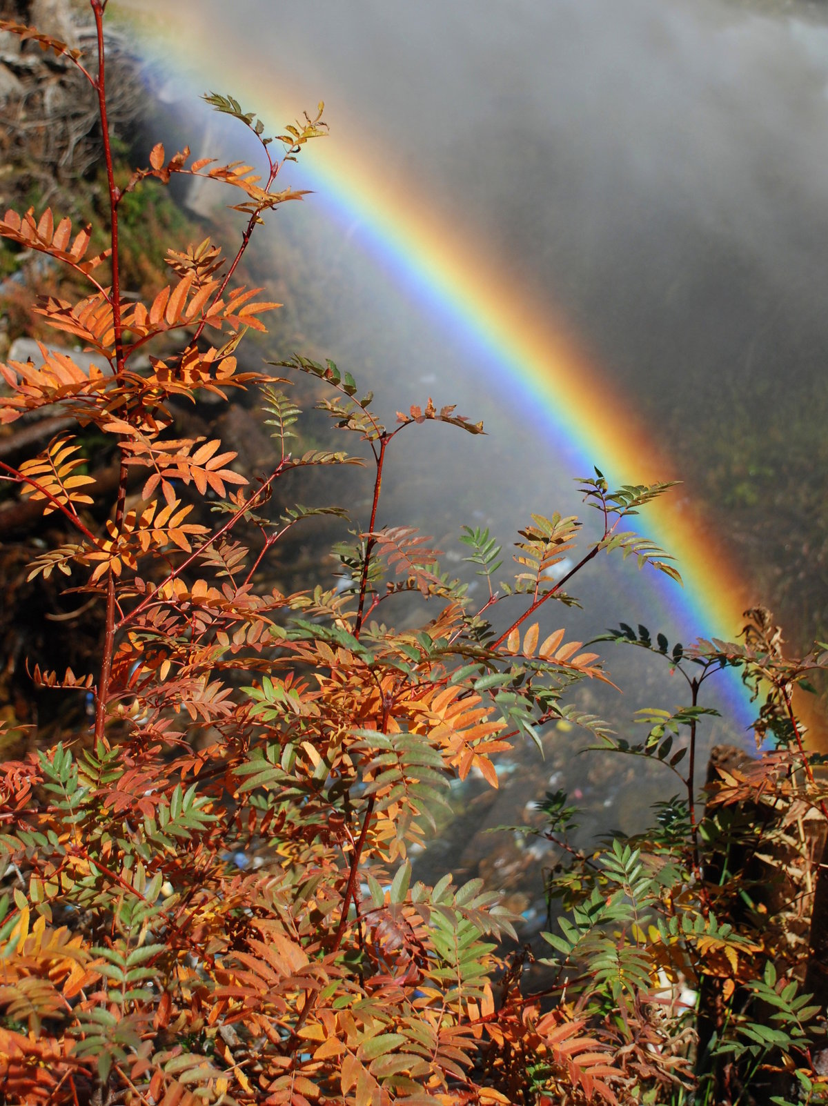 Осенняя радуга фото стихи травма мало