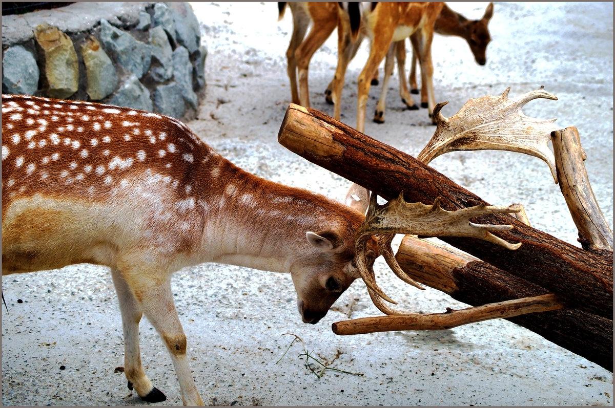животный мир крыма картинки фото функций этих сервисах