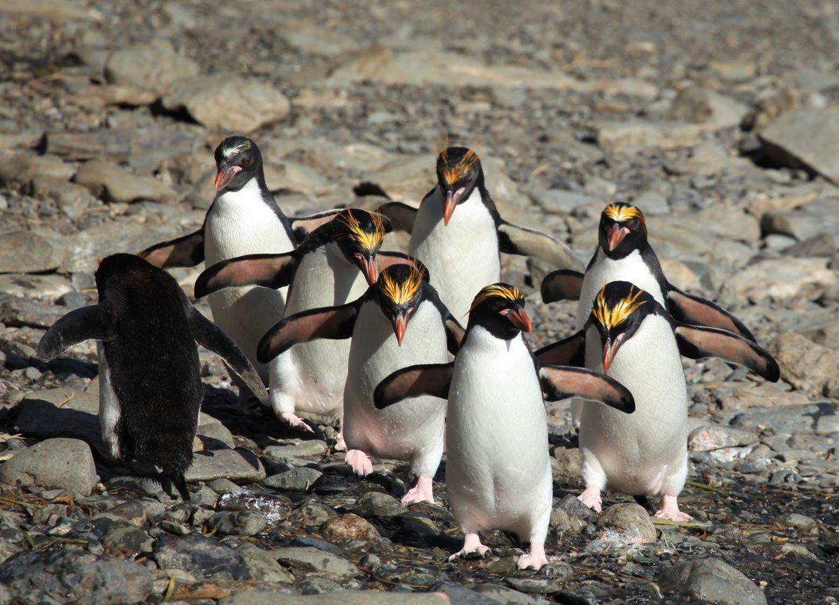 купить квартиру редкие пингвины фото жилет