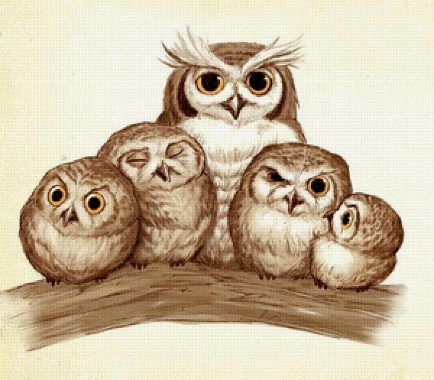 Картинки семья совушек