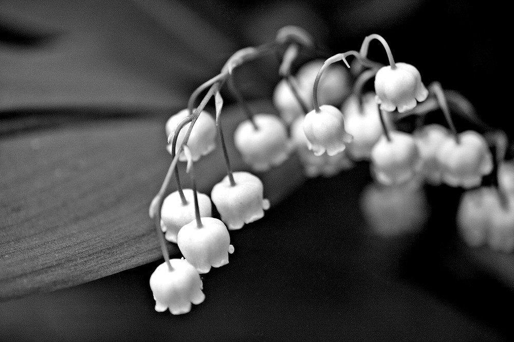 Черно белые фото весны в хорошем качестве