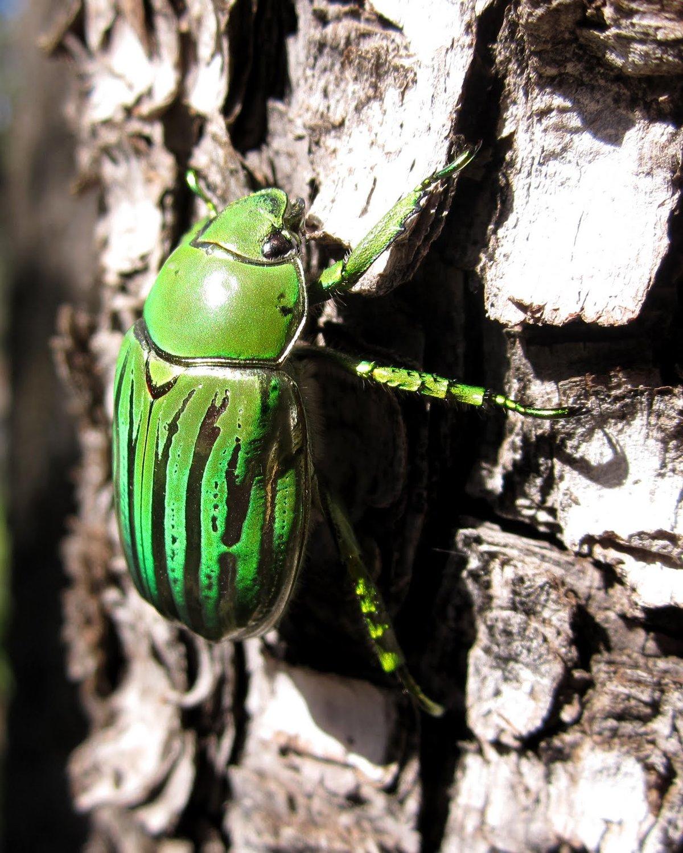 Красивые жуки картинки, открытка днем рождения