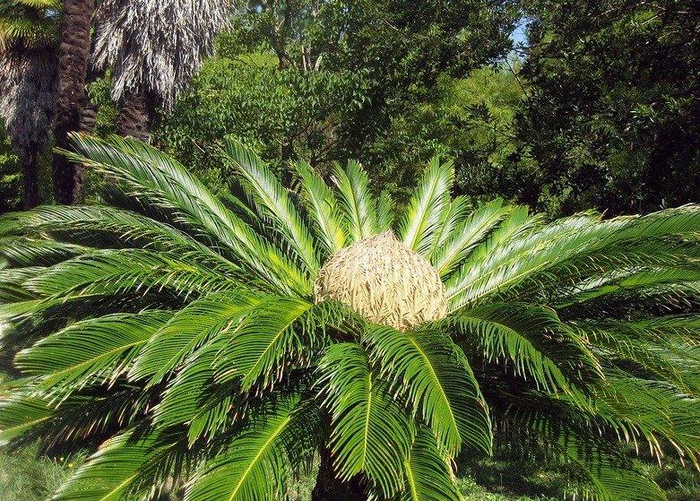 этим абзацем растения абхазии фото с названием рос