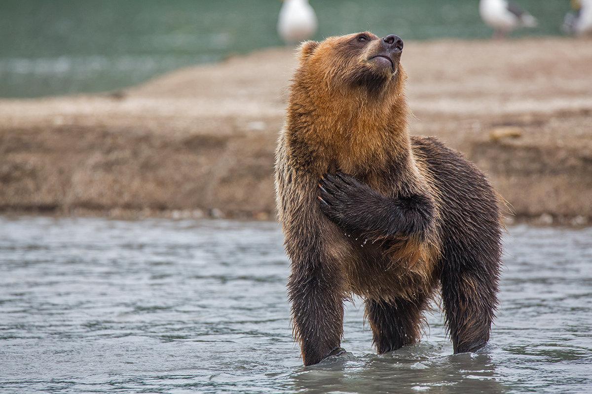 Медведь классные картинки, новогодняя открытка подготовительная