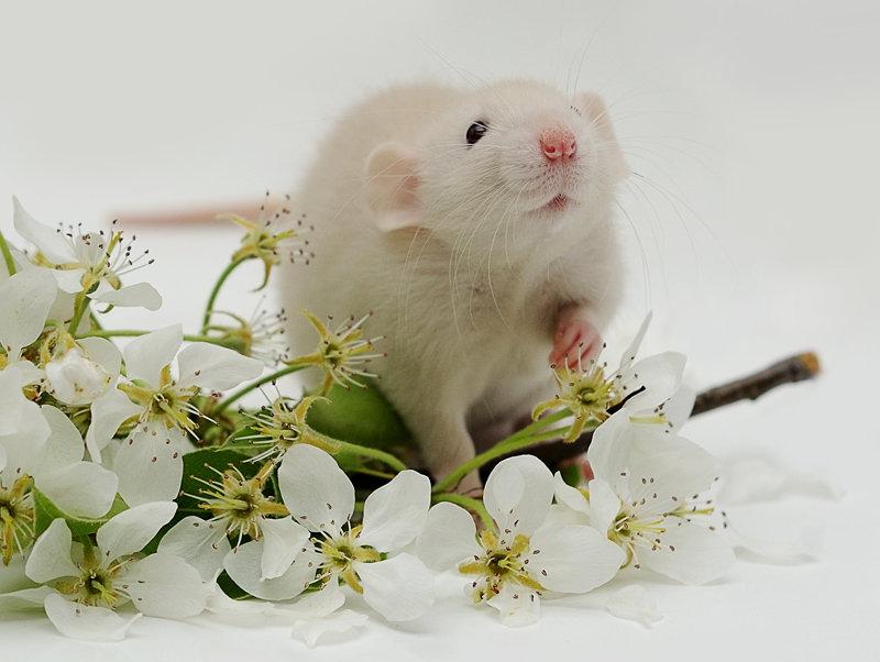 вам фото с днем рождения с мышкой это структурированный