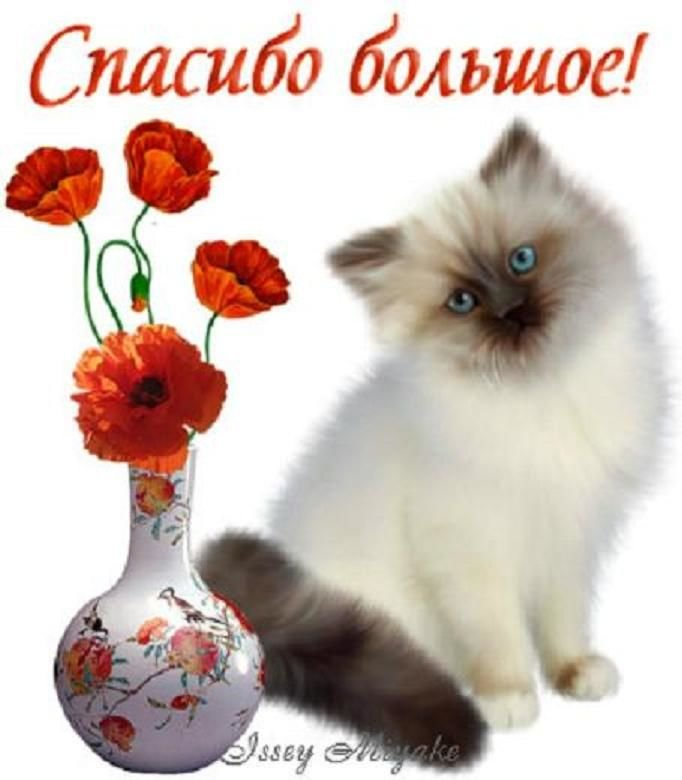 Спасибо открытки с котами, поздравлением