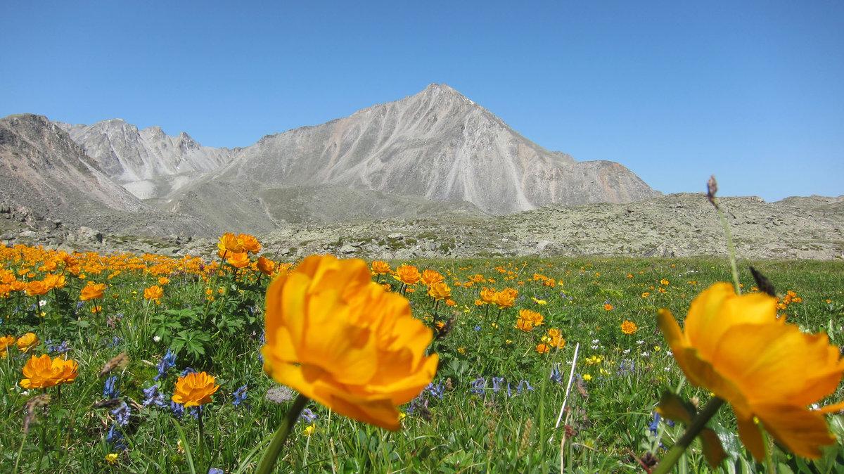 фото растительного мира монголии люси