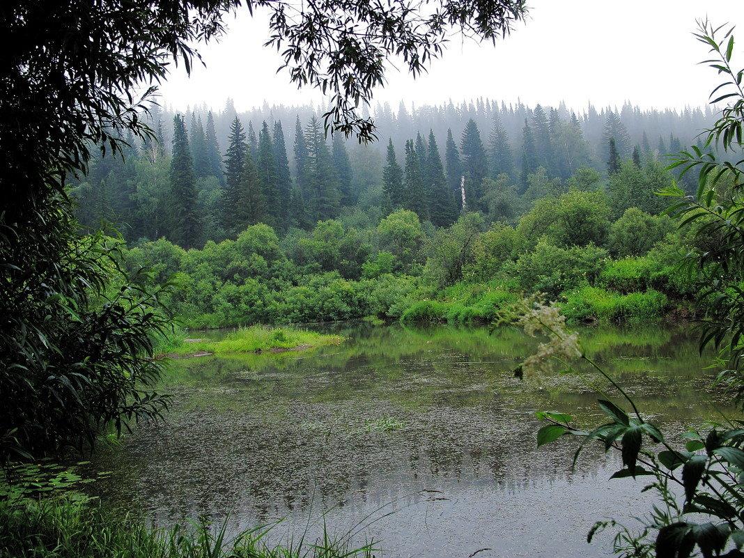Окутан лес туманной дымкой