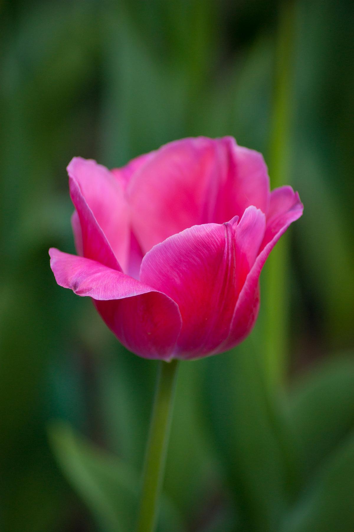 развлечений уже тюльпаны фото картинки высокого качества там