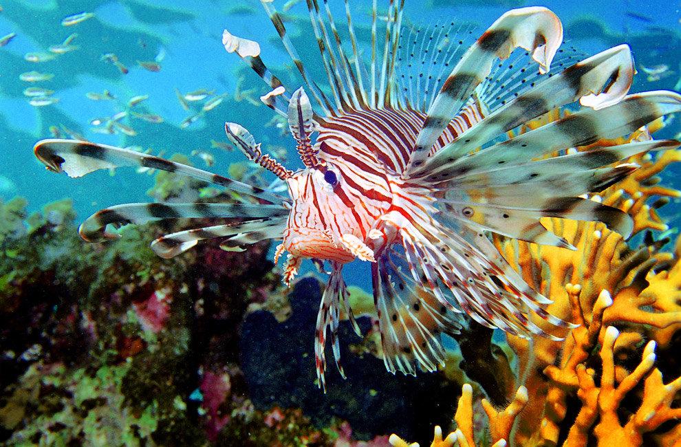 Обитатели океанов и морей картинки