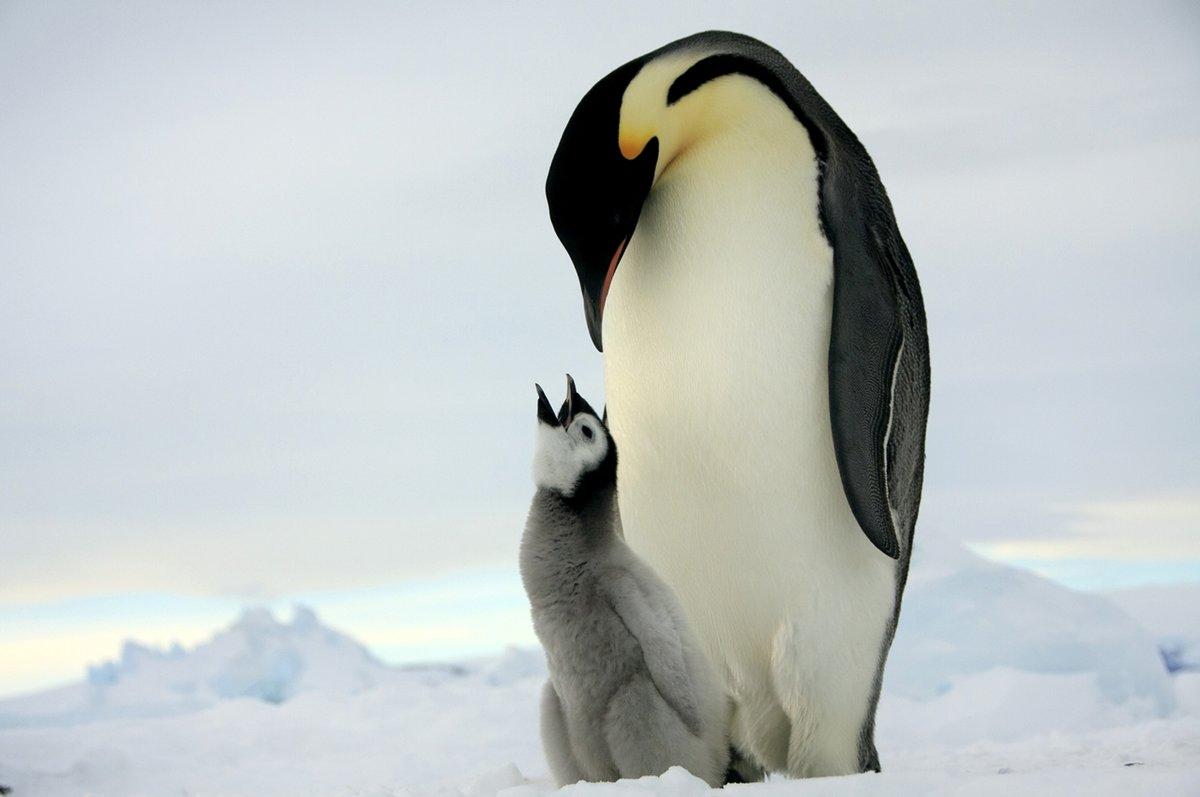 Картинка с пингвинами, надписями для девушек