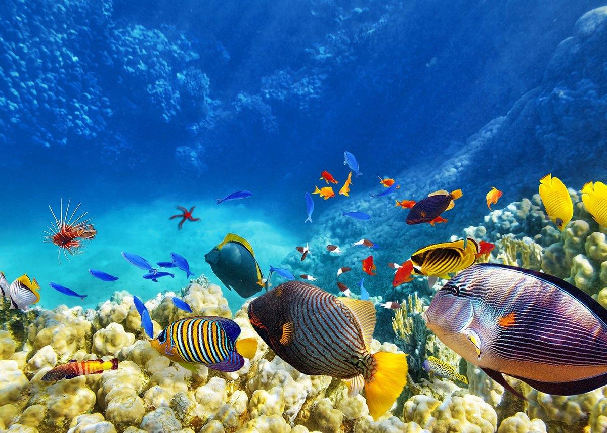 находящиеся контакте подводный мир океана фото высокого разрешения том, где