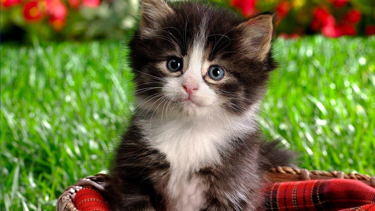 Крупные картинки котят