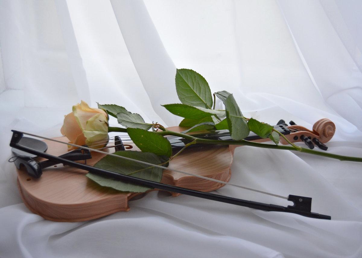 картинка скрипка и цветы оттенков почти белого