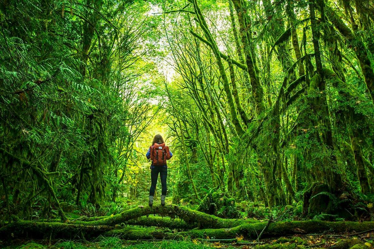 Картинка путешествия по лесу