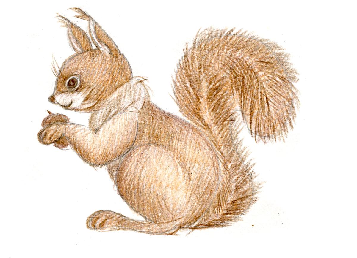 Картинки животных цветным карандашом