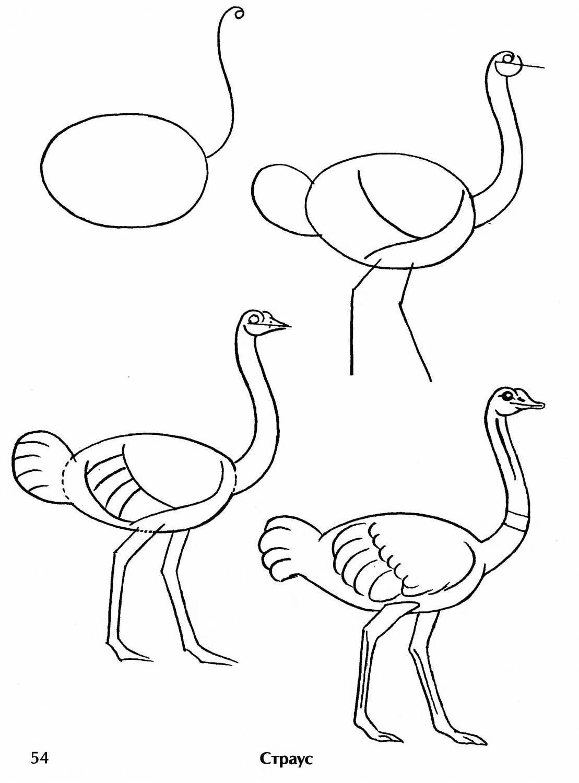 картинка страуса мультяшного пошагово приготовлением
