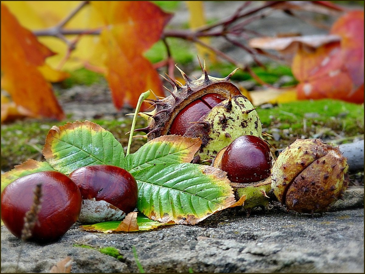 картинки осени листья орехи желуди тучка дождь грибы вязаного дизайна