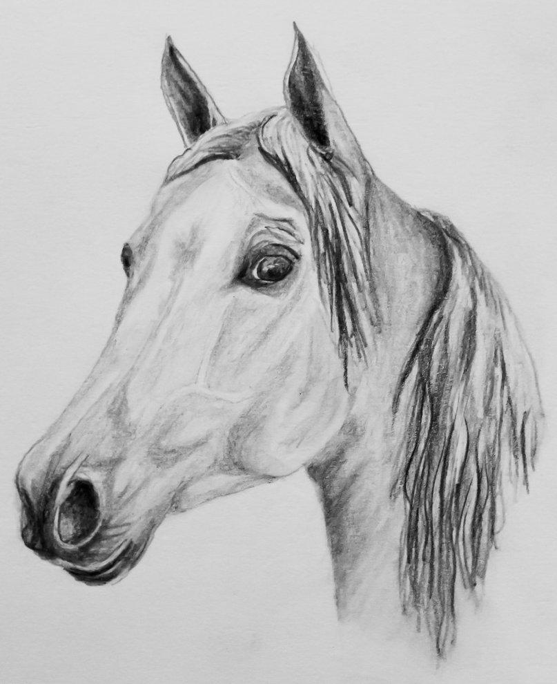 поделимся мнением картинки рисунки лошадь те, которые связаны